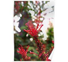 Red blossom burst Poster