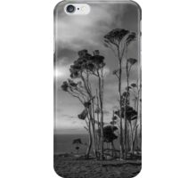 Melaleuca Trees iPhone Case/Skin