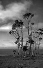 Melaleuca Trees by yolanda