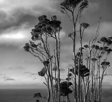 Melaleuca Trees by yolanda