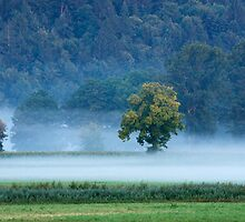 Misty marsh by Ian Middleton
