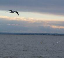 Evening Flight by Sandra Caven