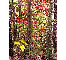 Woodsy Watercolor Photographic Print