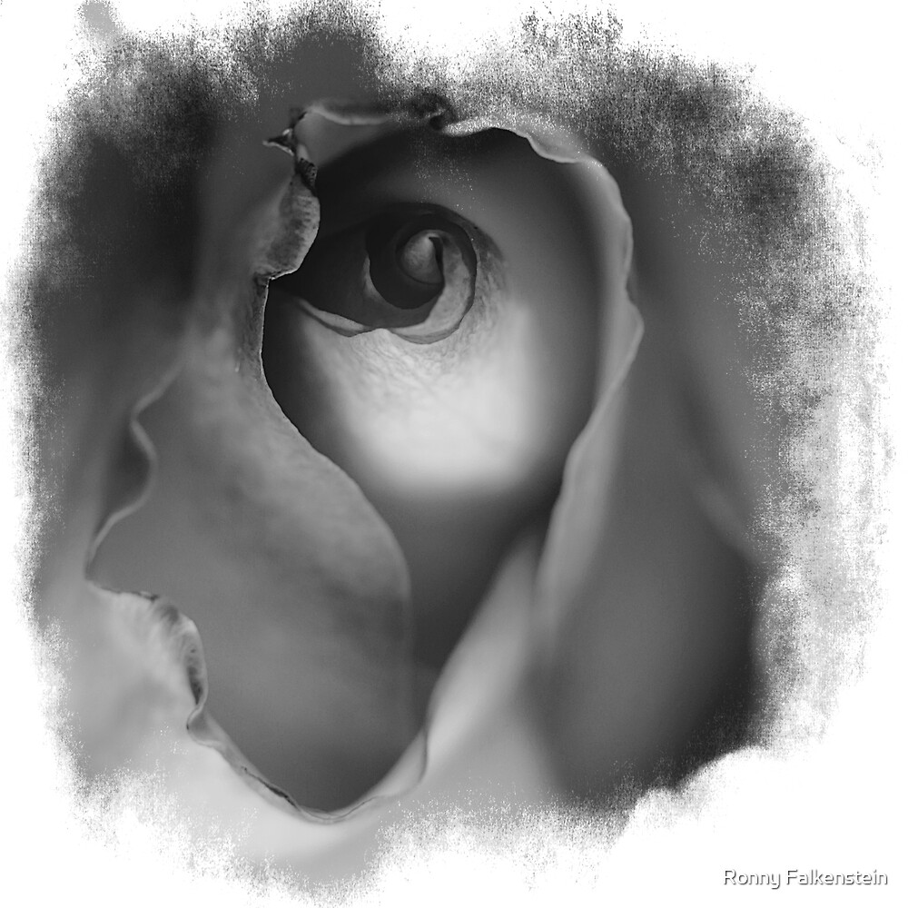 The Rose - Smile of a woman #4 by Ronny Falkenstein