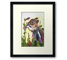 Cute little chipmunk snacking on a purple flower Framed Print