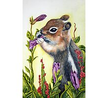 Cute little chipmunk snacking on a purple flower Photographic Print