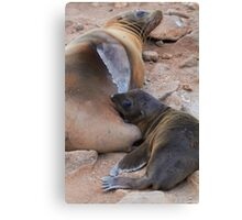 Galagapos Fur Seal Canvas Print