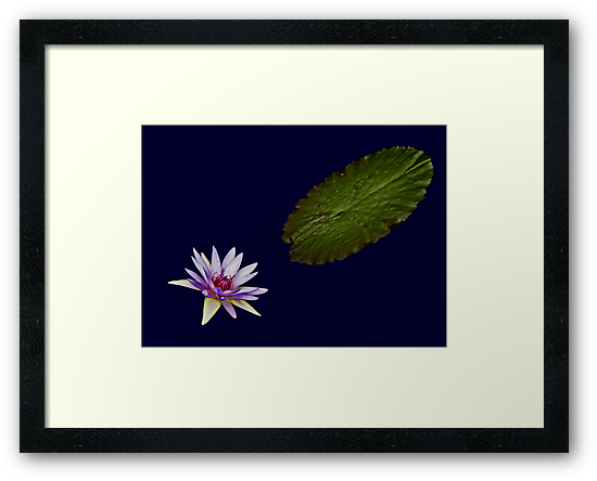 Waterlily and Leaf by cclaude