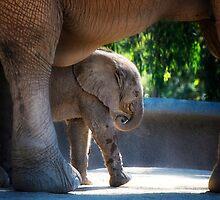 Baby Elephant by Jeannette Katzir