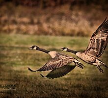 On Takeoff by Deborah  Benoit
