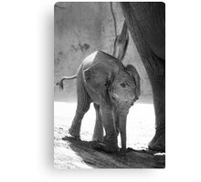 Baby Elephant, black and white Canvas Print