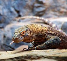 Komodo Dragon by Jeannette Katzir