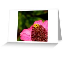 Zinnia | Giverny, France Greeting Card