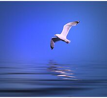 Seagull in Flight - #2 Photographic Print