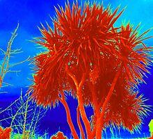 Rare Red Irish Palm Tree by Fara