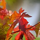 Autumn Colours pt3 by Lisa Williams
