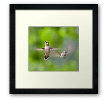 Hummingbirds, Mt Robson, BC Framed Print
