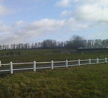 The lambing field by Mick Bull