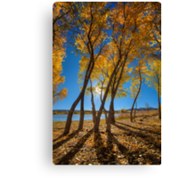 Skinny Fall Canvas Print
