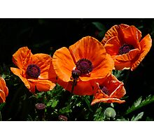 Pop Eye Poppies Photographic Print