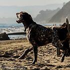 Dog on the Beach by Jonathan Melicharek