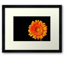 Orange Gerbera Framed Print