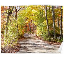 Autumn Arch on Holmes Hole Rd. Poster