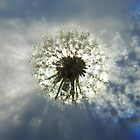 Summer Snowflake  by Nicole  Markmann Nelson