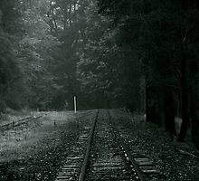 Puffing Billy by David Toolan