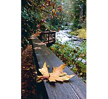 autumn on Sweet Creek... Photographic Print