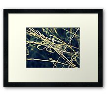 Reed Abstract Framed Print