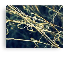 Reed Abstract Canvas Print