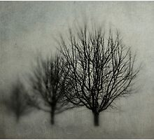 Winters Solitude Photographic Print