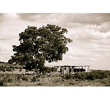 Old Barn & The Master Tree Photographic Print