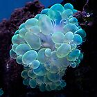 Bubble coral for iPad by Celeste Mookherjee