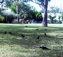 The Crow Convention 07 11 12 by Robert Phillips