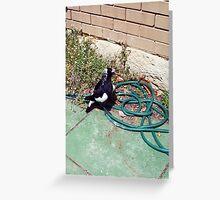 Magpie Three - 07 11 12 Greeting Card