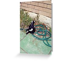 Magpie Three - 07 11 12 Greeting Card