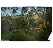 Canning River Mornings Poster