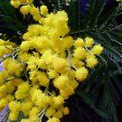 Sensitive plant by Ana Belaj