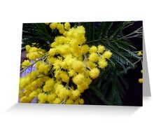 Sensitive plant Greeting Card