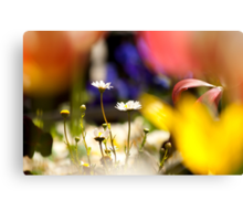 Colorful Daisies Canvas Print