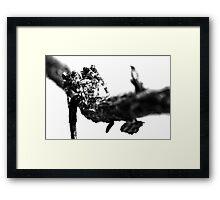 Where Thorns Are Born Framed Print