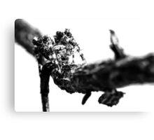Where Thorns Are Born Canvas Print