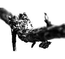 Where Thorns Are Born Photographic Print