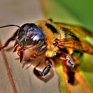The Carpenter Bee by Kathy Baccari