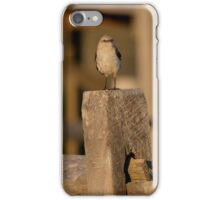 Mimus Polyglottos - Northern Mockingbird | Fire Island, New York iPhone Case/Skin