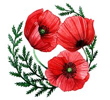 The poppies by Mistra