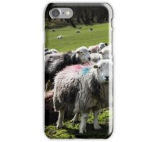Herdwick Sheep in the Lake district iPhone Case/Skin