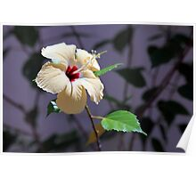 Hibiscus Shadows Poster